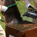 Green Institute Commences The Bee Keeping Training Programme In Ward 19 Rural Chipinge.